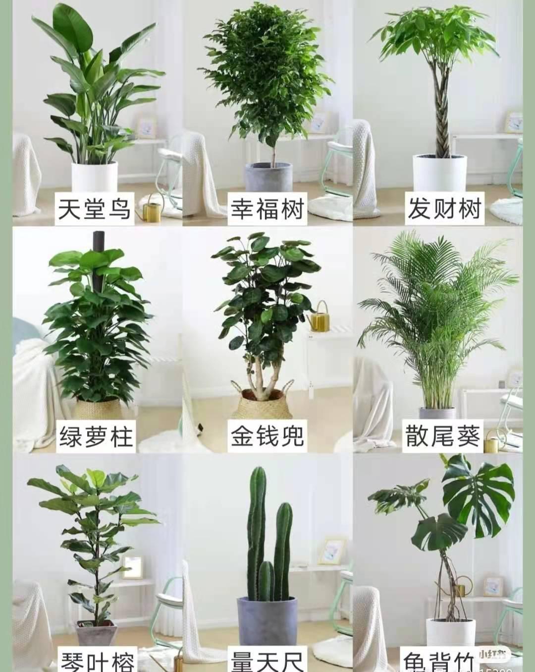 适合摆放的九种大型绿植